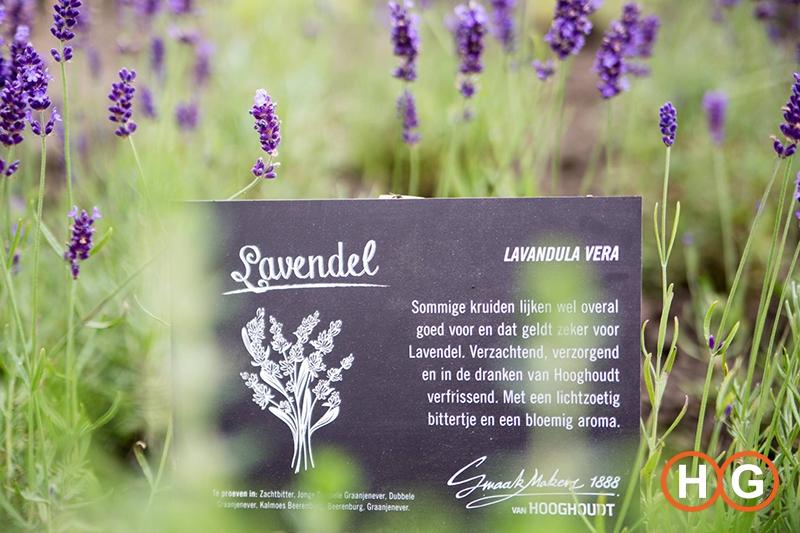 Hooghoudt kruiden tuin lavendel